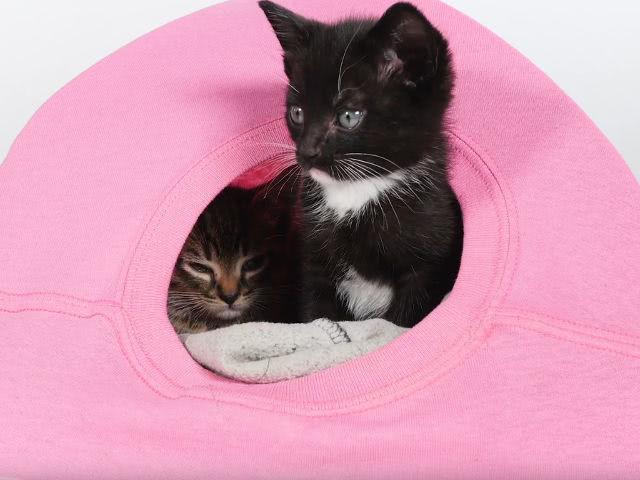 Для изготовления кошачьего домика потребуются: • старая футболка, • скотч,…