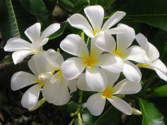 Можно ли дарить комнатные цветы в горшках