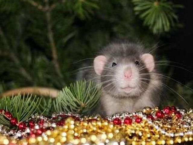 Прикольные поздравления с Новым годом 2020 Крысы: ...