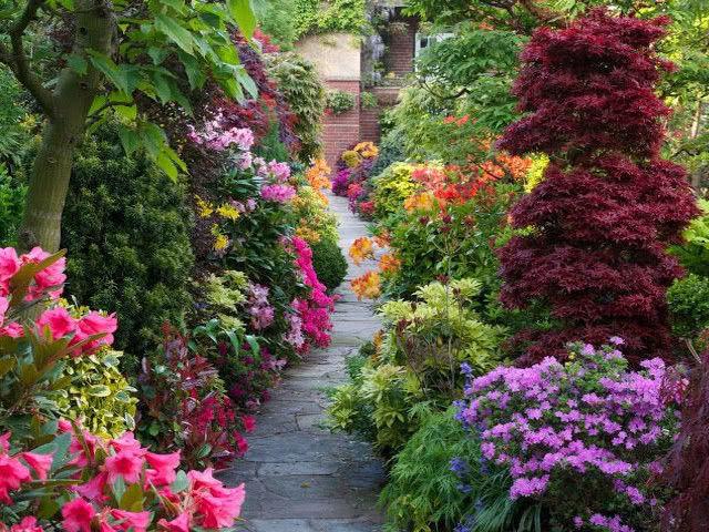Цветок — дерево: уход в домашних условиях, чтобы цвел