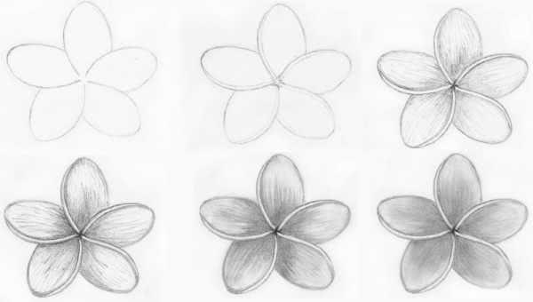 Красивые рисунки цветов для поэтапной срисовки карандашом-1