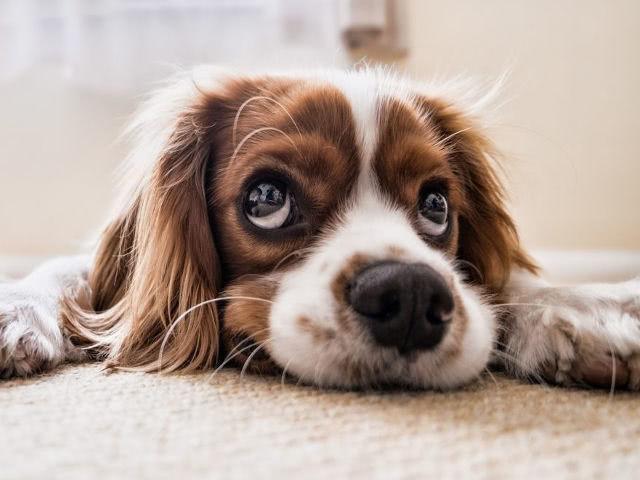 Владельцы собак больше гуляют и проводят времени на свежем воздухе…