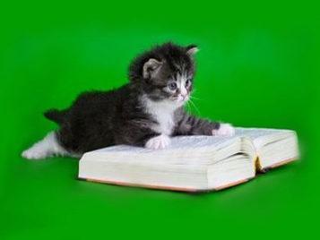 Переводчик: кошачий язык — общечеловеческий