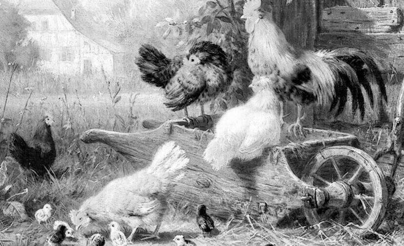 Читать сказку Ушинский — Путушок с семьёй