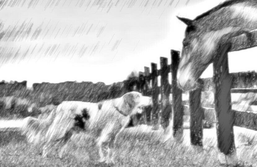 Читать сказку Ушинский — Спор животных