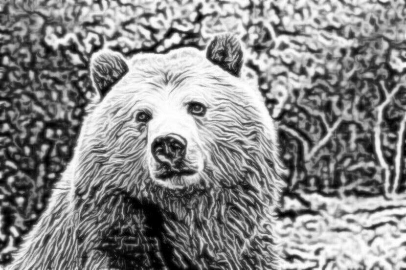 Читать сказку Ушинский — Учёный медведь