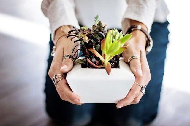Можно ли дарить комнатные цветы в горшках на новоселье_1