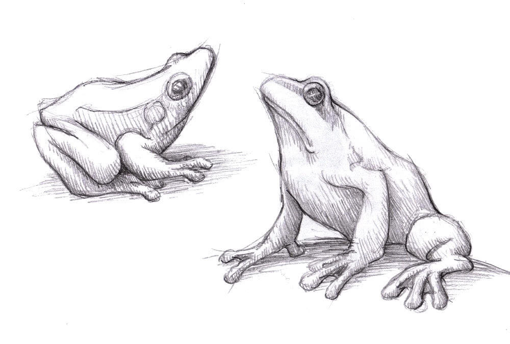 Как срисовать красивую картинку животного карандашом-1