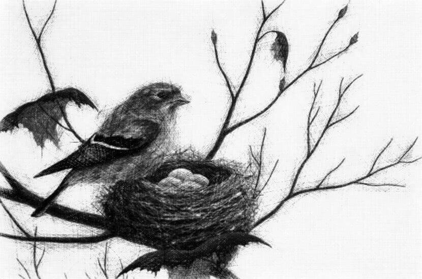 Читать стихи Ушинский — Птичка