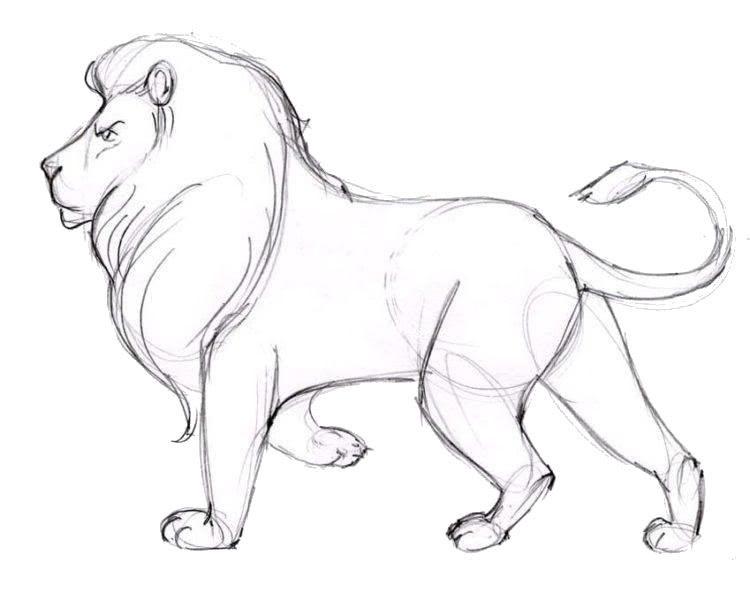 Как срисовать красивую картинку животного карандашом-3