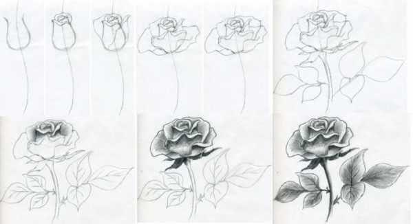 Красивые рисунки цветов для поэтапной срисовки карандашом-3