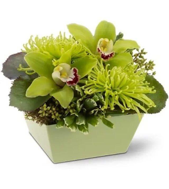 Можно ли дарить комнатные цветы на свадьбу в горшках_1