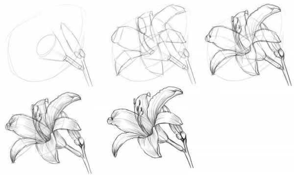 Красивые рисунки цветов для поэтапной срисовки карандашом-4