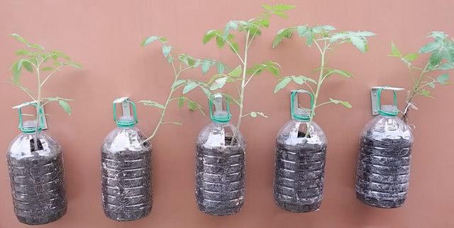 Подвесной контейнер для томатов из 5-литровой пластиковой бутылки_5