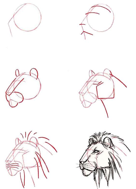 исунки животных для срисовки карандашом для начинающих поэтапно-2