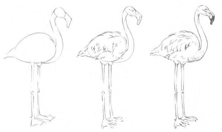 исунки животных для срисовки карандашом для начинающих поэтапно-3